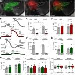 Differential Impact of Inhibitory G-Protein Signaling Pathways in Ventral Tegmental Area Dopamine Neurons on Behavioral Sensitivity to Cocaine and Morphine