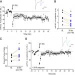 Role for Endogenous BDNF in Endocannabinoid-Mediated Long-Term Depression at Neocortical Inhibitory Synapses