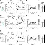 Long-Term Treatment with Low Doses of Methamphetamine Promotes Neuronal Differentiation and Strengthens Long-Term Potentiation of Glutamatergic Synapses onto Dentate Granule Neurons