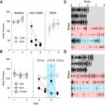Context-Dependent and Context-Independent Effects of D1 Receptor Antagonism in the Basolateral and Central Amygdala during Cocaine Self-Administration