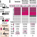 Poor Concordance of Floxed Sequence Recombination in Single Neural Stem Cells: Implications for Cell Autonomous Studies
