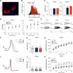 Sensory Neurons of the Dorsal Root Ganglia Become Hyperexcitable in a T-Cell-Mediated MOG-EAE Model of Multiple Sclerosis