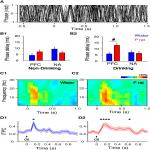 COMT Inhibition Alters Cue-Evoked Oscillatory Dynamics during Alcohol Drinking in the Rat