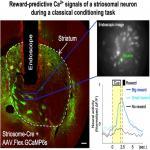 Reward-Predictive Neural Activities in Striatal Striosome Compartments