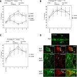 Arp2/3 and VASP Are Essential for Fear Memory Formation in Lateral Amygdala
