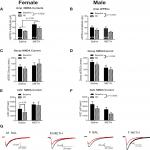 Methamphetamine Self-Administration Elicits Sex-Related Changes in Postsynaptic Glutamate Transmission in the Prefrontal Cortex