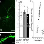 Cell-Autonomous Regulation of Dendritic Spine Density by PirB