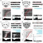 Tactile Stimulation of the Face and the Production of Facial Expressions Activate Neurons in the Primate Amygdala