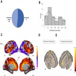 Intrinsic Functional Connectivity of the Anterior Cingulate Cortex Is Associated with Tolerance to Distress