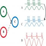 Communication between Brain Areas Based on Nested Oscillations