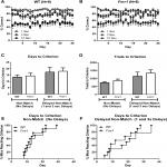 Normal Performance of <em>Fmr1</em> Mice on a Touchscreen Delayed Nonmatching to Position Working Memory Task