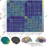 A Whole-Cortex Probabilistic Diffusion Tractography Connectome
