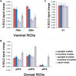 Ventral and Dorsal Pathways Relate Differently to Visual Awareness of Body Postures under Continuous Flash Suppression