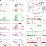 <em>In Vitro</em> Testing of Voltage Indicators: Archon1, ArcLightD, ASAP1, ASAP2s, ASAP3b, Bongwoori-Pos6, BeRST1, FlicR1, and Chi-VSFP-Butterfly