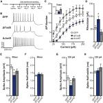 ΔFosB Decreases Excitability of Dorsal Hippocampal CA1 Neurons