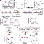 An Adenosine A<sub>2A</sub> Receptor Antagonist Improves Multiple Symptoms of Repeated Quinpirole-Induced Psychosis