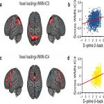 Identification of Two Distinct Working Memory-Related Brain Networks in Healthy Young Adults