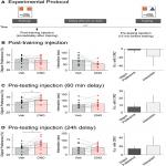 Selective Activation of Cholecystokinin-Expressing GABA (CCK-GABA) Neurons Enhances Memory and Cognition