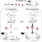 Lovastatin, not Simvastatin, Corrects Core Phenotypes in the Fragile X Mouse Model