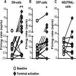 Optogenetic Evidence for a Direct Circuit Linking Nociceptive Transmission through the Parabrachial Complex with Pain-Modulating Neurons of the Rostral Ventromedial Medulla (RVM)