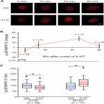 Biphasic Regulation of p38 MAPK by Serotonin Contributes to the Efficacy of Stimulus Protocols That Induce Long-Term Synaptic Facilitation