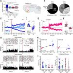 Dynamic Encoding of Incentive Salience in the Ventral Pallidum: Dependence on the Form of the Reward Cue