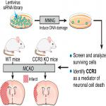 High-Content Genome-Wide RNAi Screen Reveals <em>CCR3</em> as a Key Mediator of Neuronal Cell Death
