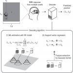 Position Information Encoded by Population Activity in Hierarchical Visual Areas