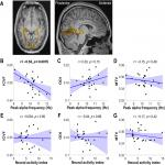 Inter-individual Differences in Occipital Alpha Oscillations Correlate with White Matter Tissue Properties of the Optic Radiation