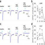 Differential Nicotinic Modulation of Glutamatergic and GABAergic VTA Microcircuits