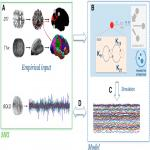 Functional Mechanisms of Recovery after Chronic Stroke: Modeling with the Virtual Brain