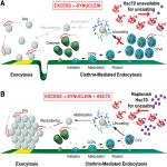 Hsc70 Ameliorates the Vesicle Recycling Defects Caused by Excess α-Synuclein at Synapses