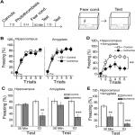 Developing of Focal Ischemia in the Hippocampus or the Amygdala Reveals a Regional Compensation Rule for Fear Memory Acquisition
