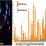Clonal Analysis of Newborn Hippocampal Dentate Granule Cell Proliferation and Development in Temporal Lobe Epilepsy