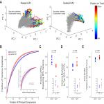 Divergence in Population Coding for Space between Dorsal and Ventral CA1