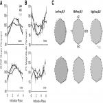 Spontaneous Infraslow Fluctuations Modulate Hippocampal EPSP-PS Coupling