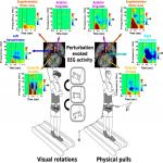 Differentiation in Theta and Beta Electrocortical Activity between Visual and Physical Perturbations to Walking and Standing Balance