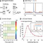 An Integrate-and-Fire Spiking Neural Network Model Simulating Artificially Induced Cortical Plasticity