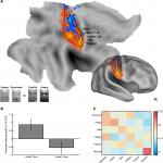Somatosensory Representations Link the Perception of Emotional Expressions and Sensory Experience