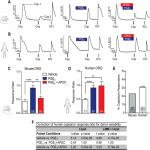 Metabotropic Glutamate Receptor 2/3 (mGluR2/3) Activation Suppresses TRPV1 Sensitization in Mouse, But Not Human, Sensory Neurons