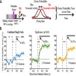 Cortical Localization of the Sensory-Motor Transformation in a Whisker Detection Task in Mice