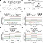 Variability in State-Dependent Plasticity of Intrinsic Properties during Cell-Autonomous Self-Regulation of Calcium Homeostasis in Hippocampal Model Neurons