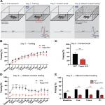 Fear Deficits in Hypomyelinated <em>Tppp</em> Knock-Out Mice