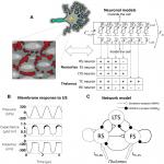 Cell-Type-Selective Effects of Intramembrane Cavitation as a Unifying Theoretical Framework for Ultrasonic Neuromodulation