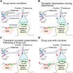 Nicotine Modifies Corticostriatal Plasticity and Amphetamine Rewarding Behaviors in Mice