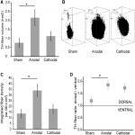 Anodal Transcranial Direct Current Stimulation Enhances Survival and Integration of Dopaminergic Cell Transplants in a Rat Parkinson Model