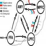 Valence-Dependent Coupling of Prefrontal-Amygdala Effective Connectivity during Facial Affect Processing