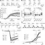 Luciferase shRNA Presents off-Target Effects on Voltage-Gated Ion Channels in Mouse Hippocampal Pyramidal Neurons