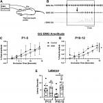 Chronic, Episodic Nicotine Alters Hypoglossal Motor Neuron Function at a Critical Developmental Time Point in Neonatal Rats