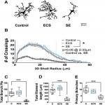 Electroconvulsive Shock Enhances Responsive Motility and Purinergic Currents in Microglia in the Mouse Hippocampus